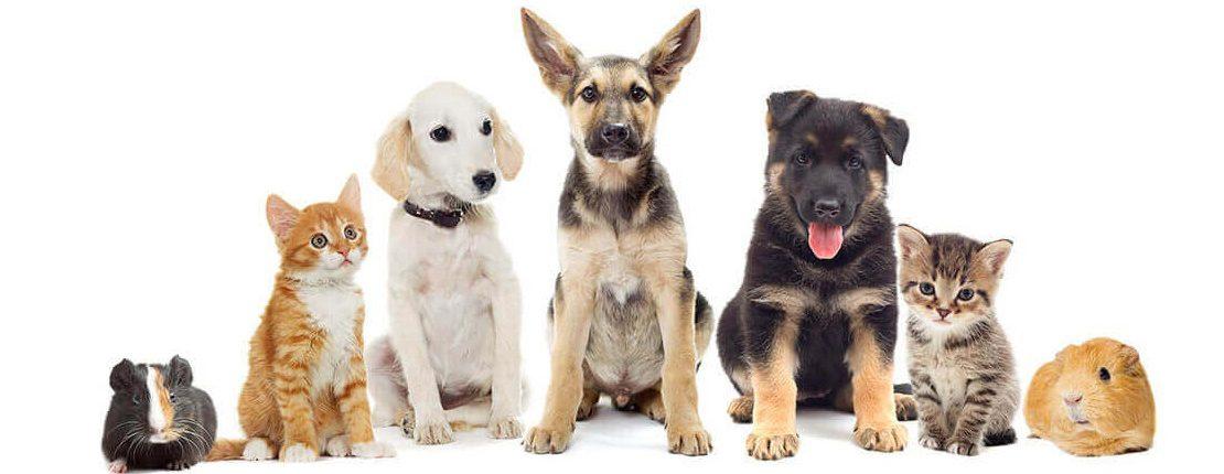 Keeping our pet's safe - Return Unwanted Medicines